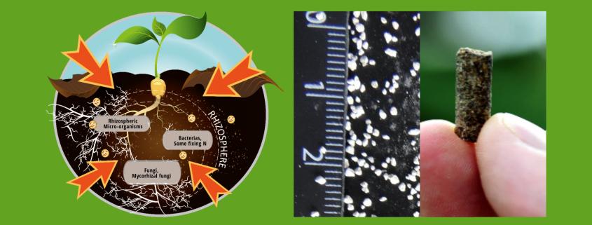 Bacteriosol®Booster 10 & 50