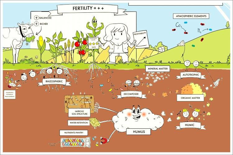 Humus Healthy Soil