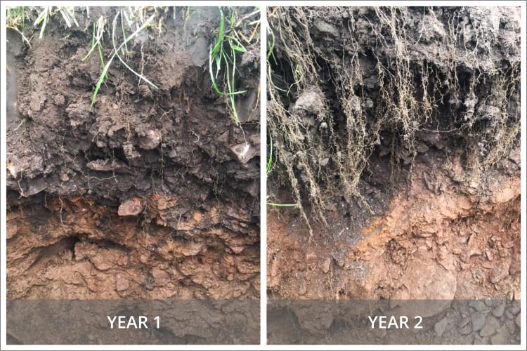 Soil Comparison